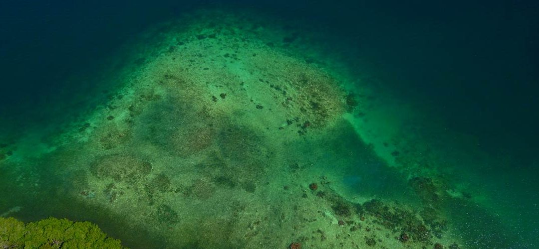 Coral Reefs: Anthropogenic Impacts and Restoration in the Caribbean