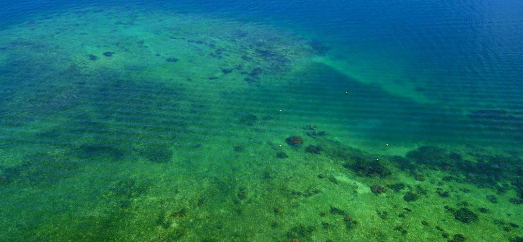 How Coral Restoration Panama became Caribbean Coral Restoration